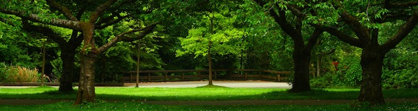 Green landscape formed by beautiful trees on a park